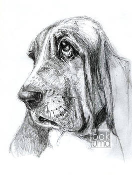 Basset hound by Bakhtiar Umataliev