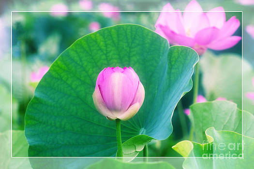 Beverly Claire Kaiya - Tranquil Pink Lotus Bud Flower Green Leaf