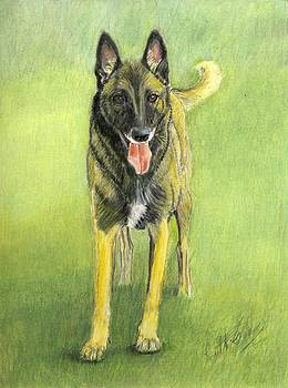 Belgian Malinois  by Ruth Seal