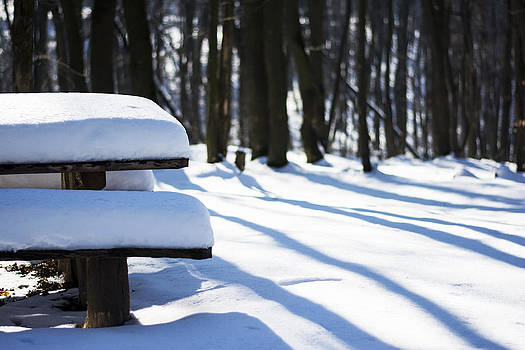 Newnow Photography By Vera Cepic - Bench with snow in forest