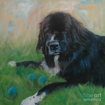 Bernese Mountain Dog by Pet Whimsy  Portraits