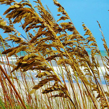 Beyond the Sea Oats Lies Eternity by Lorraine Heath