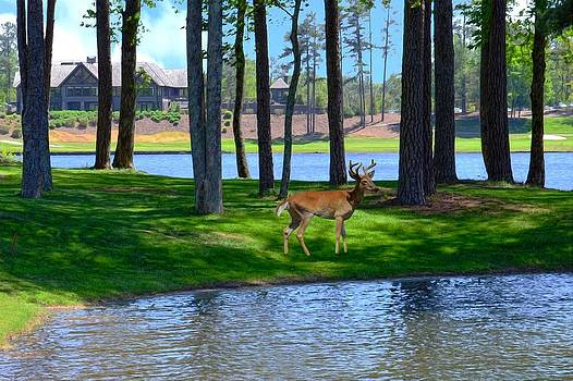 Big Canoe Buck by Bob Jackson