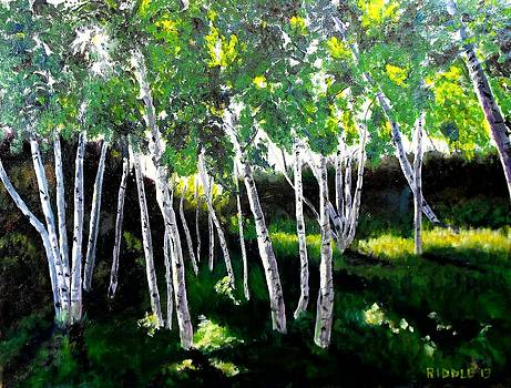 Birches in Fort Williams by Jack Riddle