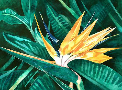 Pauline Walsh Jacobson - Bird of Paradise