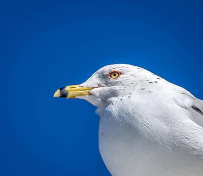 Bird by Samir Chokshi