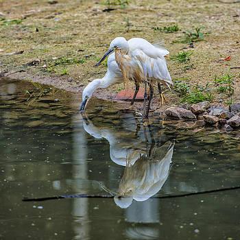 Thomas Schreiter - birds