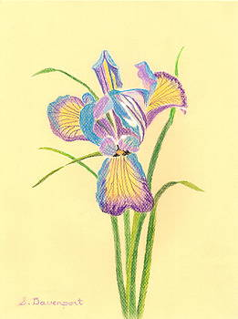 Blue and White Iris in Pastel by Sara Davenport