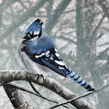 Bluejay by Edith Hicks