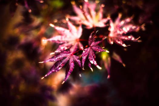 Bright Leaves by J Riley Johnson