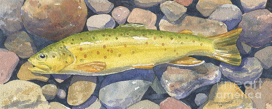Brown Trout Rush Creek by Mark Jennings