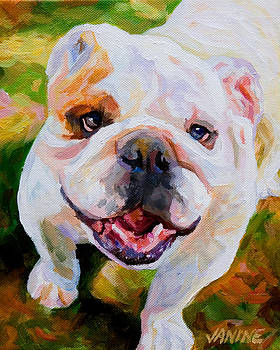 Bulldog Beauty by Janine Hoefler