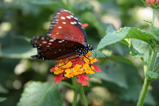 Butterfly Beauty by Rebecca Christine Cardenas
