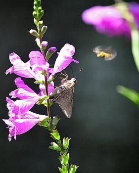 Butterfly by Diana Berkofsky