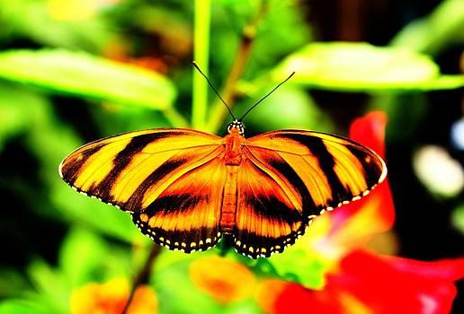 Butterfly by Martin Hristov