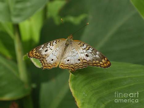 Butterfly on Leaf by Barbara Lightner