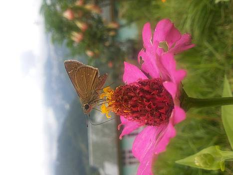 Butterfly On Pink Flower by Smrita Pradhan