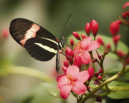 Butterfly on Red Flower by Julie Underwood