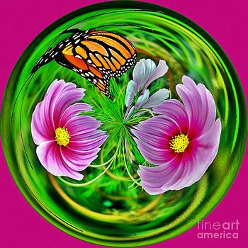 Jeff McJunkin - Butterfly Orb