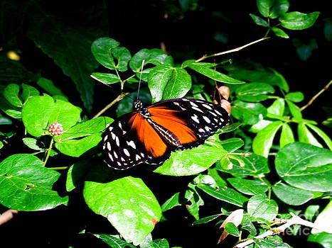 Butterfly by Sherri Williams