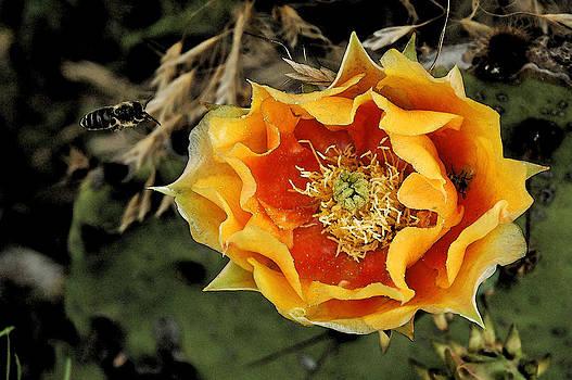 Robert Anschutz - Cactus and Bee