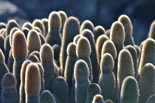 Cactus by Kike Calvo