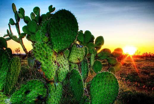 Cactus Sunset by Shane Dickeson