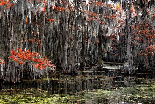Caddo Lake Fall color by Thanh Nguyen