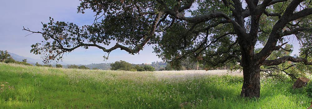 California Landscape by Jan Cipolla