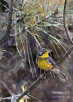 Canada Warbler by Steve Hamlin