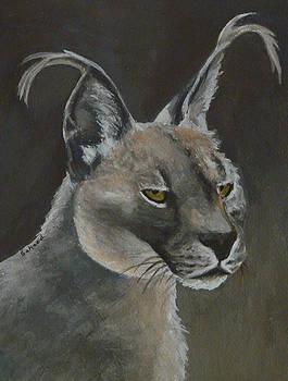 Margaret Saheed - Caracal Cat