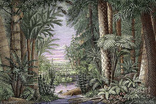 Sheila Terry - Carboniferous Landscape