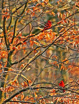 Cardinal Love by Jinx Farmer