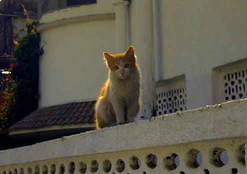 Cat on the Wall by Salman Ravish