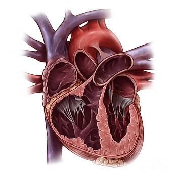 Evan Oto - Chambers Of The Heart