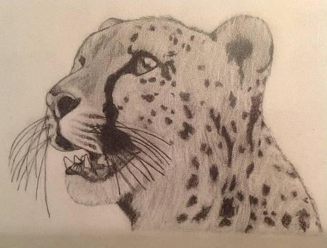 Cheetah by Noah Burdett