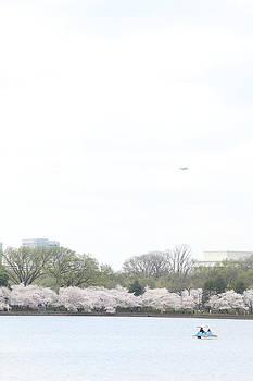 Cherry Blossoms - Washington DC - 011320 by DC Photographer