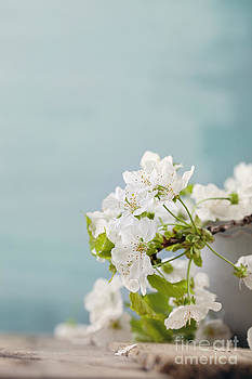 Mythja  Photography - Cherry flowers