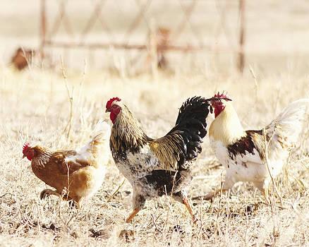 Chicken Run by Pam  Holdsworth