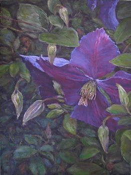 Clematis by Stephen Howell