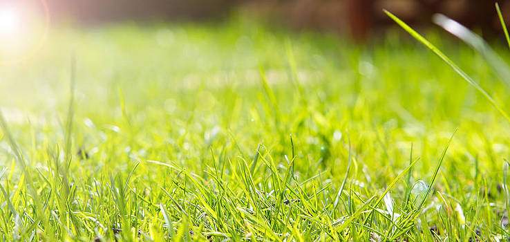 Close Up View Of The Grass In A Garden Shot From Ground Level by Fizzy Image
