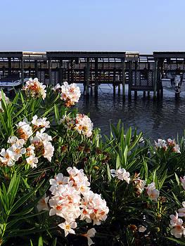 Tom DiFrancesca - Coastal Bend Beauties