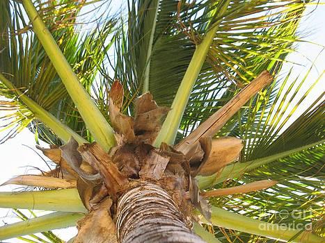 Coconut Palm - Cocotier - Ile De La Reunion - Reunion Island by Francoise Leandre