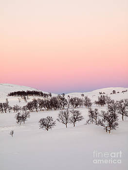 Cold Light by David Hanlon