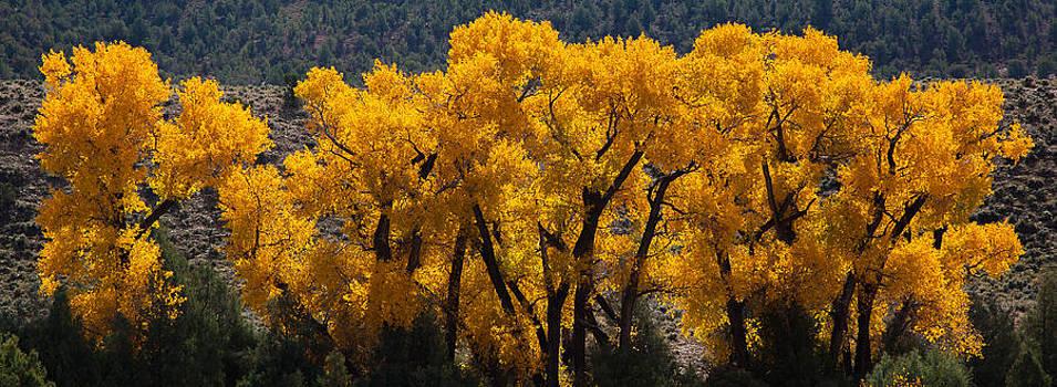 Kevin  Dietrich - Colorado River