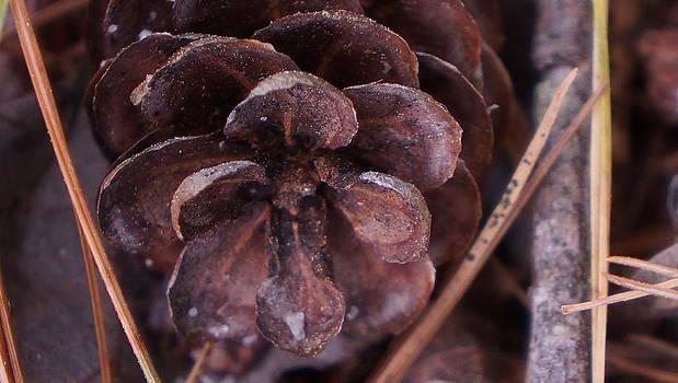 Dawn Hagar - Cone flower