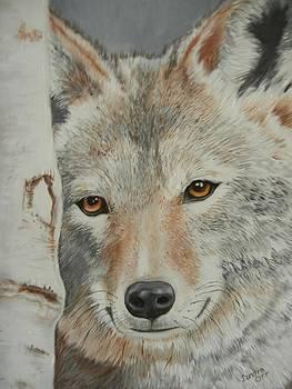 Contemplation by Loretta Orr