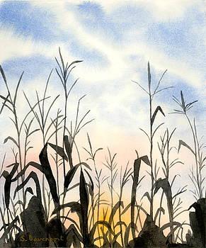 Corn Field Sunset by Sara Davenport