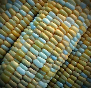 Corn by Heidi Pence