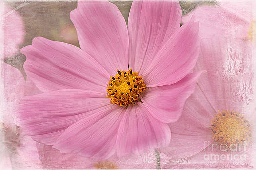 Cosmos by Cindi Ressler
